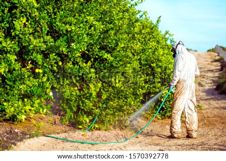 Weed insecticide fumigation. Organic ecological agriculture. Spray pesticides, pesticide on fruit lemon in growing agricultural plantation, spain. Man spraying or fumigating pesti, pest control #1570392778