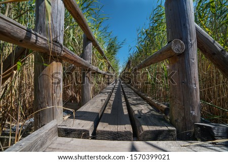 The pedestrian wooden footbridge with the railing goes through the dry reeds in the lake, with shallow water all around. Royalty-Free Stock Photo #1570399021