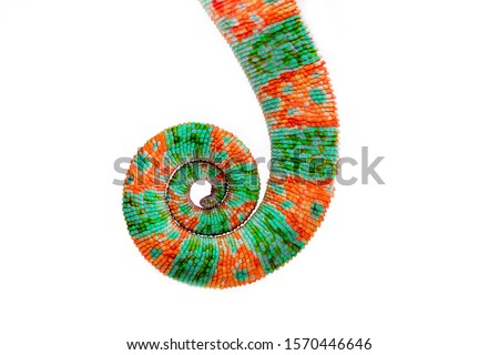 Chameleon tail isolated on a white background. Multicolor beautiful chameleon reptile with bright vibrant skin. The concept of camouflage and bright skin. Exotic tropical animal. Royalty-Free Stock Photo #1570446646