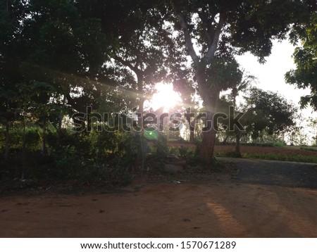 Beautiful green tree beside house #1570671289