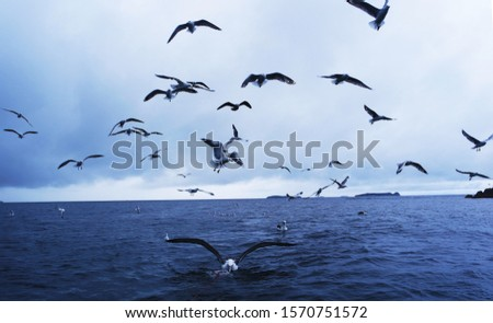 Seabirds flock looking for food #1570751572