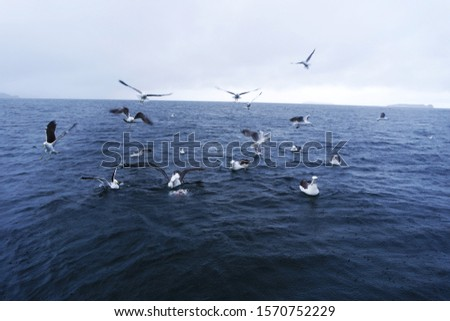 Seabirds flock by the ocean blur #1570752229