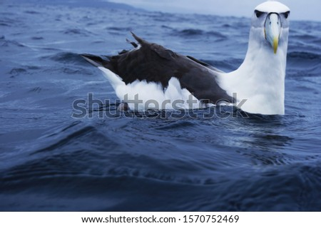 Arctic bird in the sea #1570752469
