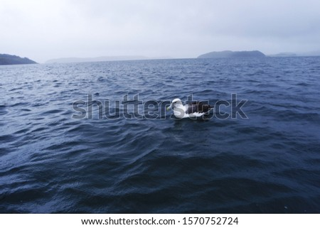 Arctic bird on the ocean #1570752724
