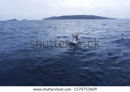 Arctic albatross floating on the sea blur #1570753609