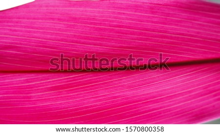 Pink natural background. plant leaf texture. natural plant structure. Pink leaf of a bush. #1570800358