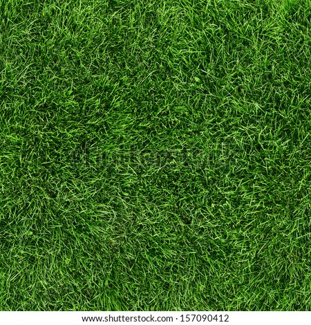 Green grass seamless texture. Seamless in only horizontal dimension. #157090412