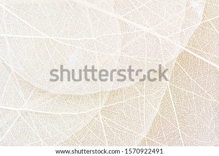 Close up of Fiber structure of dry leaves texture background. Cell patterns of Skeletons leaves, foliage branches, Leaf veins abstract of Autumn background for creative banner design or greeting card Royalty-Free Stock Photo #1570922491