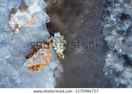 Frozen oak leafs on ice background. Time step of changes in young leaves. Concept of death in old age, aging. Different stages of life. Natural texture. Art everywhere concept #1570986757