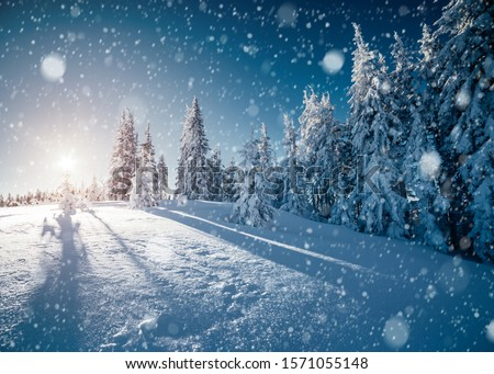 Frosty day in snowy coniferous forest. Location place of Carpathian mountains, Ukraine, Europe. Magnificent wintry wallpapers. Christmas holiday concept. Happy New Year! Discover the beauty of earth. #1571055148