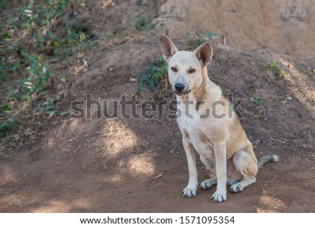 A stray dog on the ground alone. #1571095354