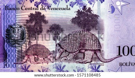 Armadillo Gigante. Priodontes maximus, in Venezuela, Portrait from Venezuela 1000 Bolivares 2017 Banknotes. An Old paper banknote, vintage retro. Famous ancient Banknotes. Collection.