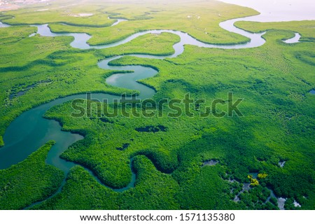 Gambia Mangroves. Aerial view of mangrove forest in Gambia. Photo made by drone from above. Africa Natural Landscape. Royalty-Free Stock Photo #1571135380