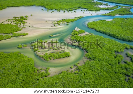 Senegal Mangroves. Aerial view of mangrove forest in the  Saloum Delta National Park, Joal Fadiout, Senegal. Photo made by drone from above. Africa Natural Landscape. #1571147293