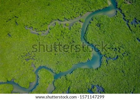 Senegal Mangroves. Aerial view of mangrove forest in the  Saloum Delta National Park, Joal Fadiout, Senegal. Photo made by drone from above. Africa Natural Landscape. #1571147299