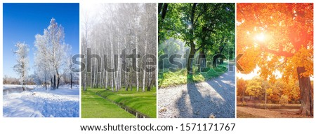 Collage seasons . All season. Seasons in one photo. Winter spring summer autumn. Tree branch. Grass with dew. Nature. Royalty-Free Stock Photo #1571171767