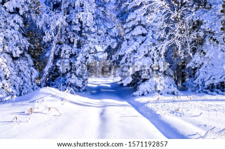 Winter snow forest trail view. Winter snow forest scene. Winter snow scene. Winter forest snow #1571192857