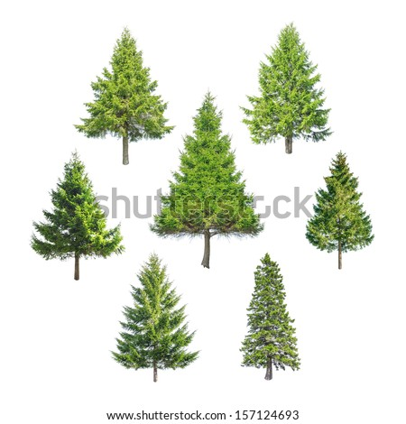 christmas tree isolated on white #157124693