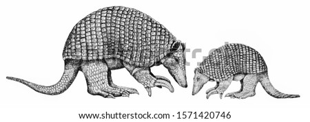 Armadillo Gigante. Priodontes maximus, in Venezuela Portrait from Banknotes. An Old paper banknote, vintage retro. Famous ancient Banknotes. Collection.