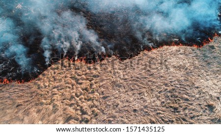 Forest and field fire. Dry grass burns, natural disaster. Aerial view. After the fire, the ground is covered with a black layer of burning and ash. View vertically down, Shooting from a small height #1571435125
