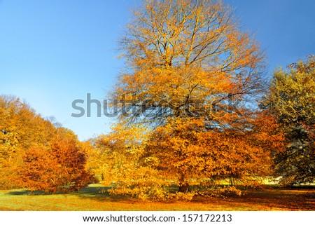 Autumn Landscape. Park in Autumn.   #157172213