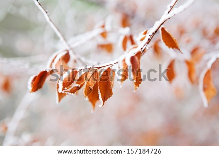 frozen leaves on the branch under the frost #157184726