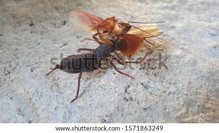 Photo of predators eating cockroaches #1571863249