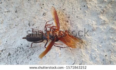Photo of predators eating cockroaches #1571863252