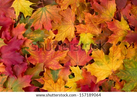 Fall leaves background #157189064