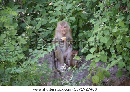 Lunch for monkeys and baby monkeys #1571927488