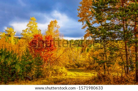 Autumn nature forest scene. Autumn forest scene. Autumn nature view. Autumn forest landscape #1571980633