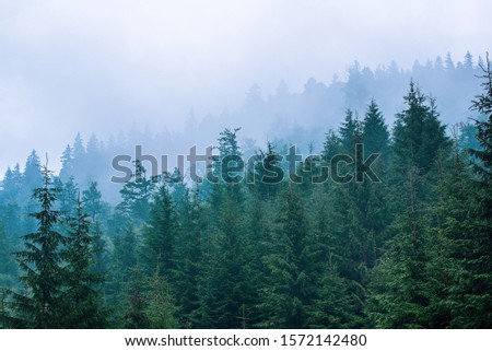 Misty foggy mountain landscape with fir forest and copyspace in vintage retro hipster style #1572142480