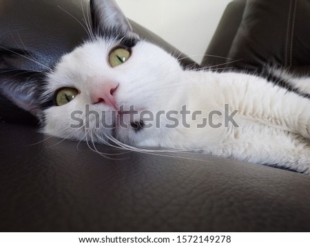 The life of a tuxedo kitty #1572149278