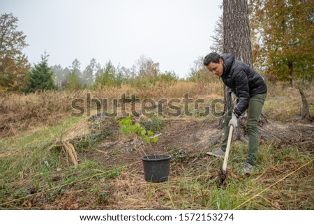 planting saplings for reforestation after the intervention of the elements #1572153274