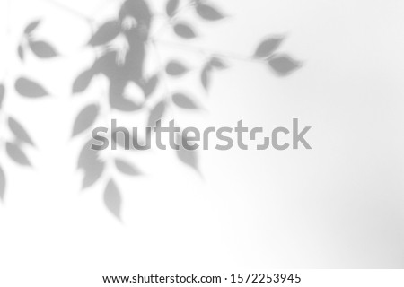 Overlay effect for photo. Gray shadow of the leaves on a white wall. Abstract neutral nature concept blurred background. Dappled light. #1572253945