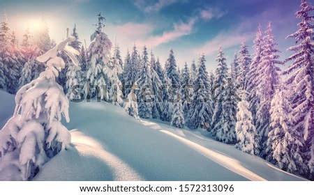 Winter landscape with spruce forest in the mountains. Winter Scene. Snowcovered Pine Trees in the Winter Wonderland Forest. Wonderful nature background. Instagram Filter. Picture of wild area