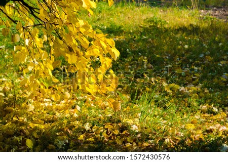 Autumn landscape, Autumn leaves with the blue sky background, Yellow, red and green bright leaves and branches, fall themes #1572430576