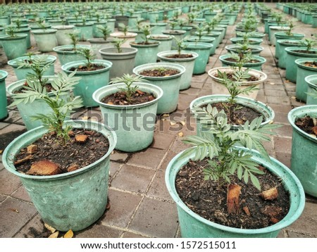 Rows of fresh green plants in potted growing in a parks. #1572515011