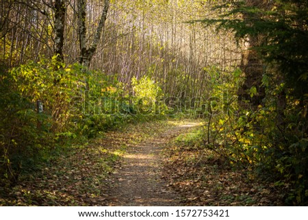 A view of a curving trail into the woods during the fall season. #1572753421