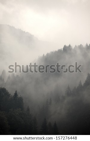 Fog covering the mountain forests #157276448