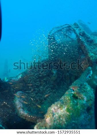 Scuba Diving world war 2 plane wreck in rabaul / Kokopo A6M2 Model Mitsubishi A6M Zero #1572935551
