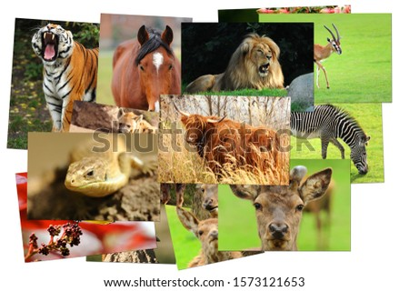 A selection of photos on various animal topics