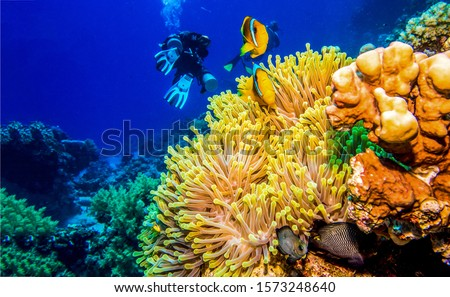 Underwater coral fishes scene. Underwater life view. Underwater world scene. Underwater coral fishes