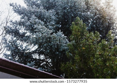 Snowfall in front of evergreens in winter #1573277935