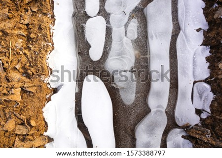 Beautiful abstract white ovals on frozen ice. #1573388797