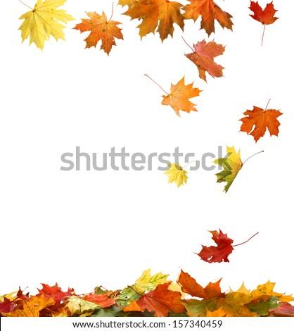 Isolated Autumn Leaves  #157340459