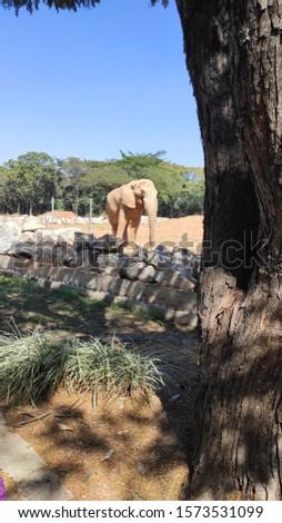Elephant Animal zoo in Belo Horizonte Brazil #1573531099
