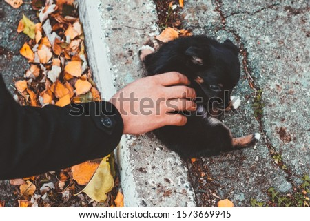 Hand touching a puppy on a street. Man helping a stray sad doggy. #1573669945