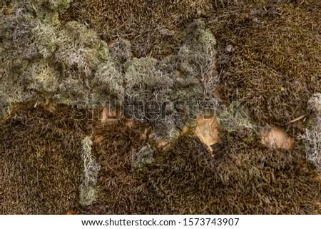 beautiful autumn decorative moss. decorative moss #1573743907