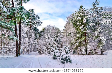 Winter snow forest landscape. Winter forest tree landscape. Snowy winter forest scene. Winter snow scene #1574038972